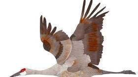 Crane1flying-charlotte-bird-cal.jpg