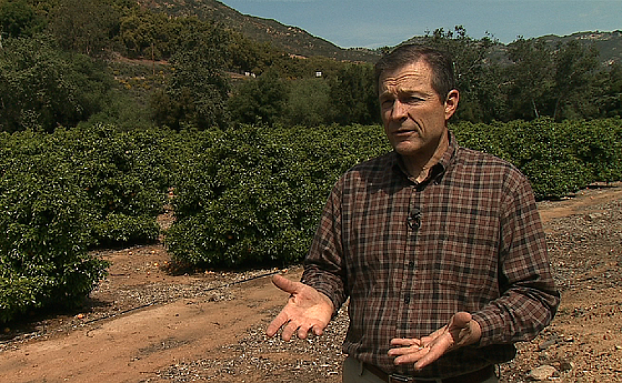 Eric Larson, executive director of the San Diego County Farm Bureau, is pictured at a grapefruit orchard in Escondido, March 19, 2015.